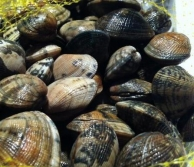 Clams (1kg pack)