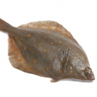 Whole Plaice